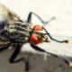 Les différents traitements anti mouche en façade et dans la maison
